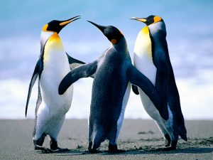 Windows 10 default penguin photo